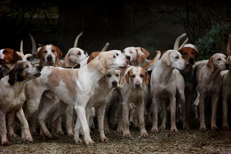 Massmord på hundar inför fotbolls vm i Ryssland