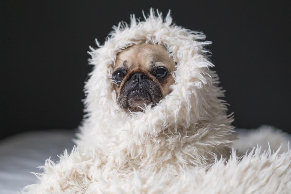 Lämna inte er hund i en kall bil !