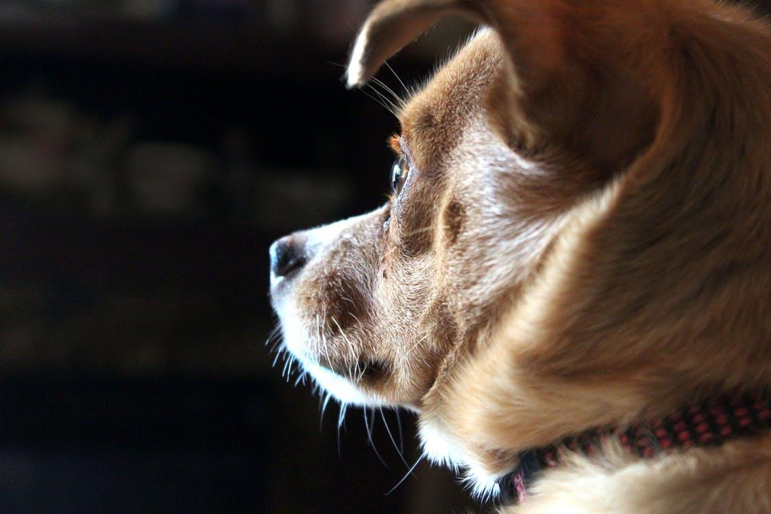 Tips för skotträdd hund !