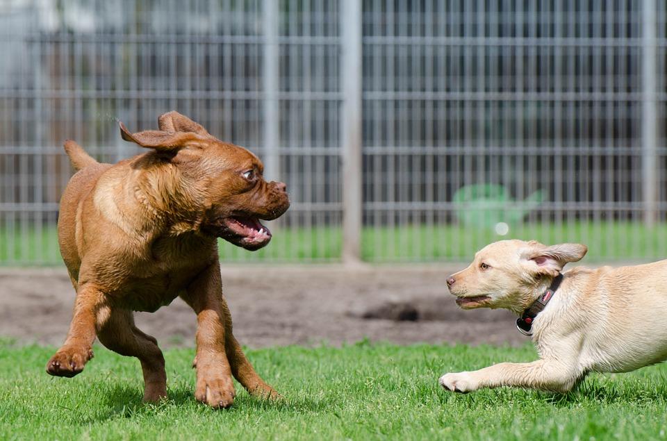 Fler hundrastplatser – Hundlekplatser behövs i varje stadsdel !
