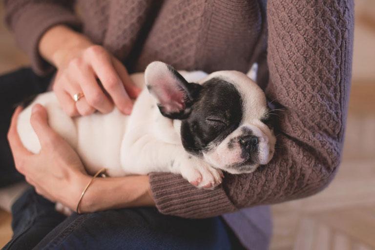 För oss är hunden lika viktig som vilken familjemedlem som helst. Det vore på tiden att lagstadga eller åtminstone göra det lite svårare för människor att skaffa sig djur, tycker ni inte det också?